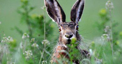Незабаром у Рава-Руському лісгоспі розпочнеться новий сезон полювання