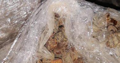 Прикордонники виявили понад 12 кг бурштину