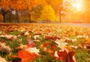 У найближчі вихідні – тепло, сонячно та без опадів