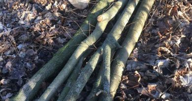 На території Річківської сільської ради зрізали дерев на третину мільйона гривень