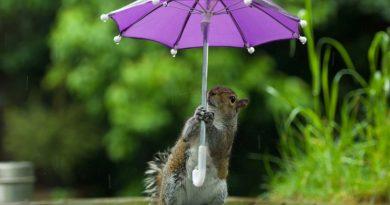 З понеділка похолоднішає та розпочнуться дощі