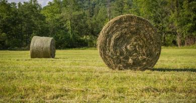 Рава-Руській громаді можуть повернути 70 гектарів землі